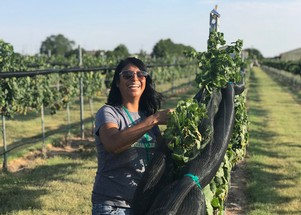 Enchantment Vineyards volunteer smiling while harvesting Chardonnay grapes in Portales, New Mexico